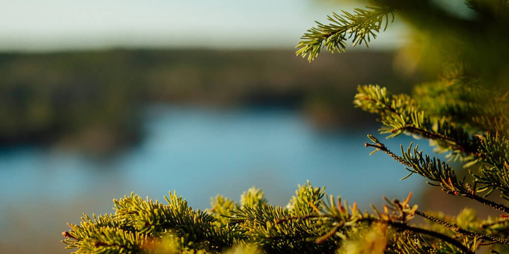modern-arbetsteknik_webb_bild_om-oss_skog_tiny_v1
